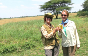 Dawa Cocktail Demo from Masai Mara, Kenya